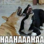 dogs laughing